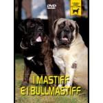 I MASTIFF E I BULLMASTIFF