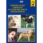 SIBERIAN HUSKY, SAMOIEDO, ALASKAN MALAMUTE, GROENLANDESE