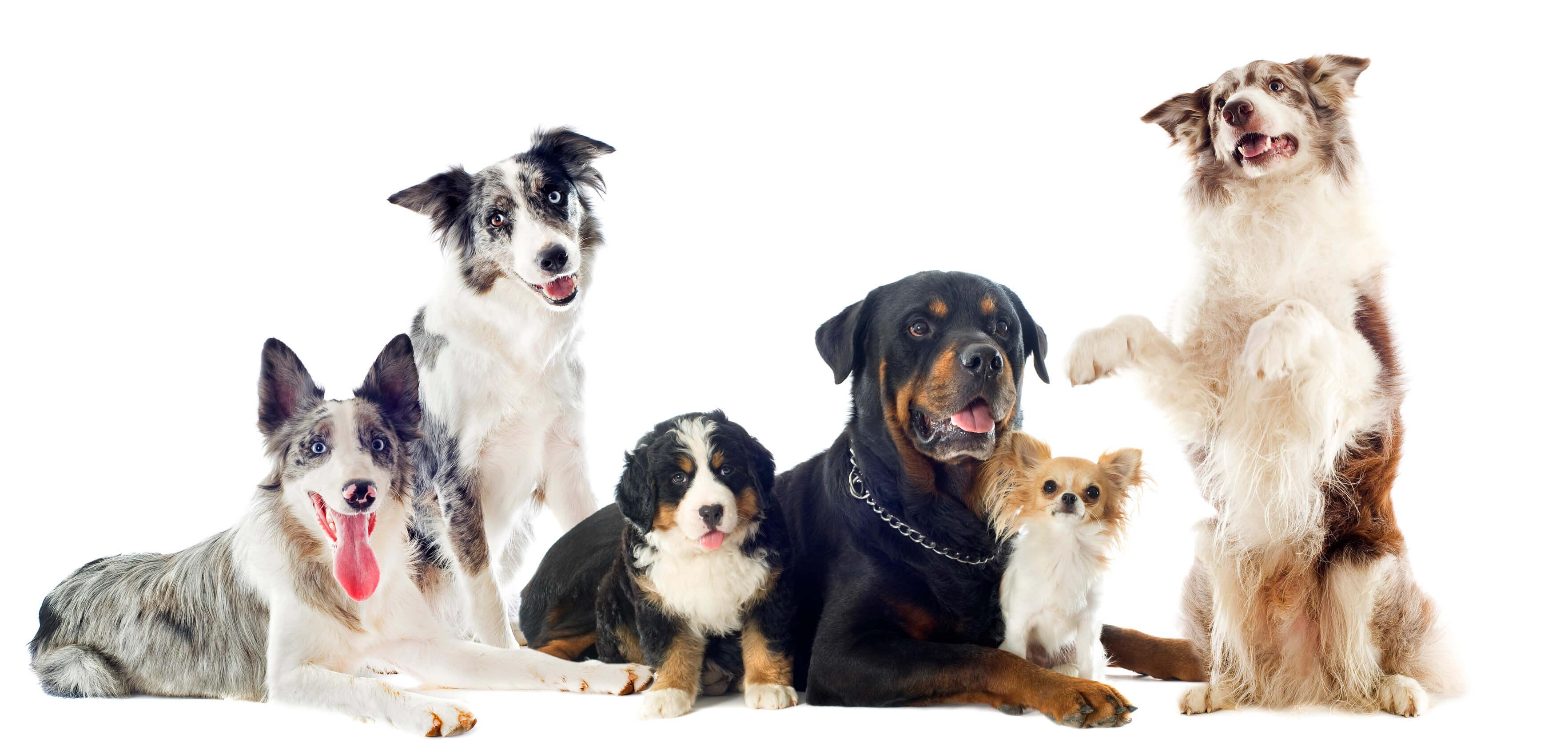 Crocchette per Can e Mangime per Cani - DOG Performance®